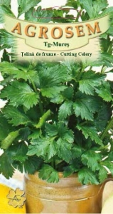 SEMINTE TELINA DE FRUNZE, CUTTING CELERY